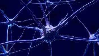stroke-recovery-neuroplasticity